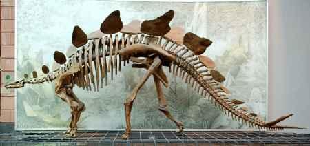 自贡恐龙骨架模型销售